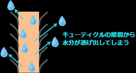 キューティクルの隙間から水分が逃げだす