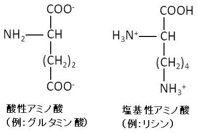 酸性塩基性アミノ酸