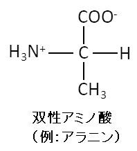 双性アミノ酸