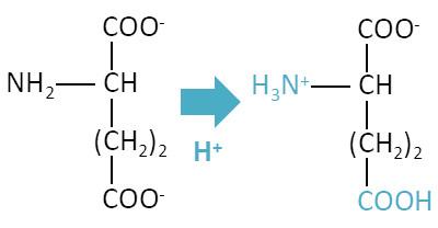 アミノ酸の等電点