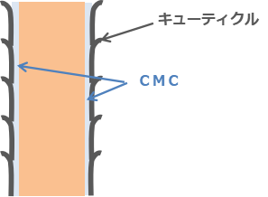 キューティクルCMC