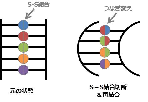 S-S結合