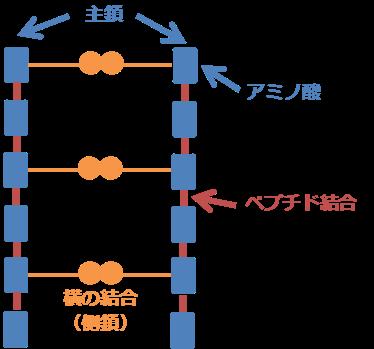 主鎖と側鎖