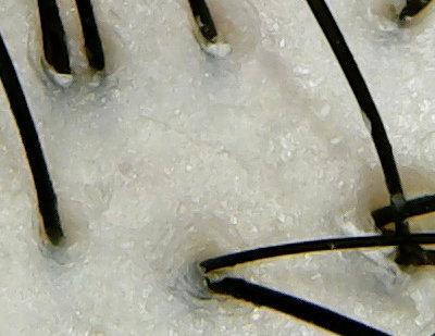 ラックスルミニークミッドナイトアロマ頭皮